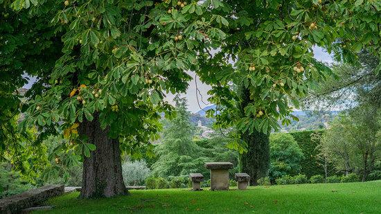 Zone détente sous des arbres