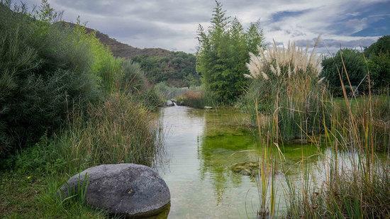 bassin de lagunage