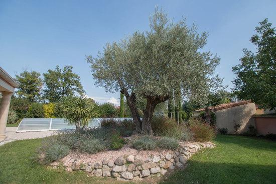 Massif olivier et lavande - Le Pouzin