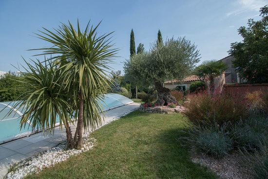 Palmier terrasse piscine